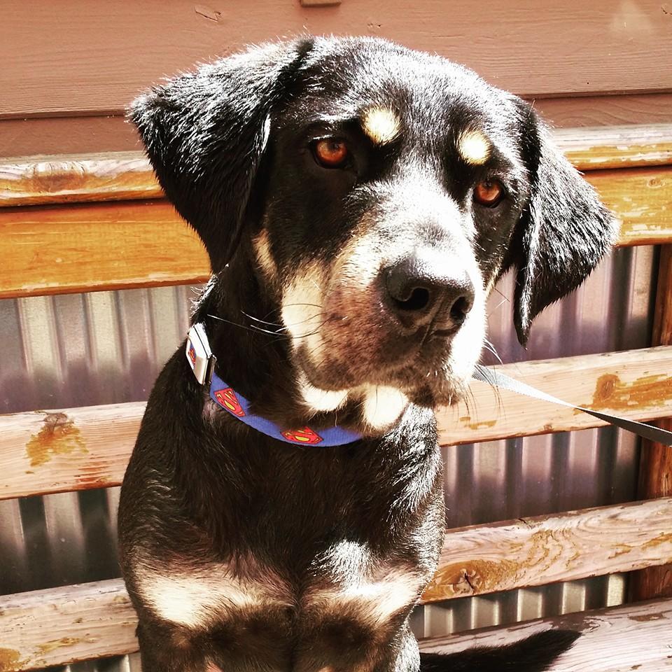Sunday Puppy Training Class @ South Bark Dog Wash | San Diego | California | United States
