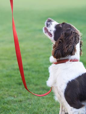 training-dog1
