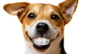 Anesthesia Free Teeth Cleaning @ South Bark Dog Wash | San Diego | California | United States